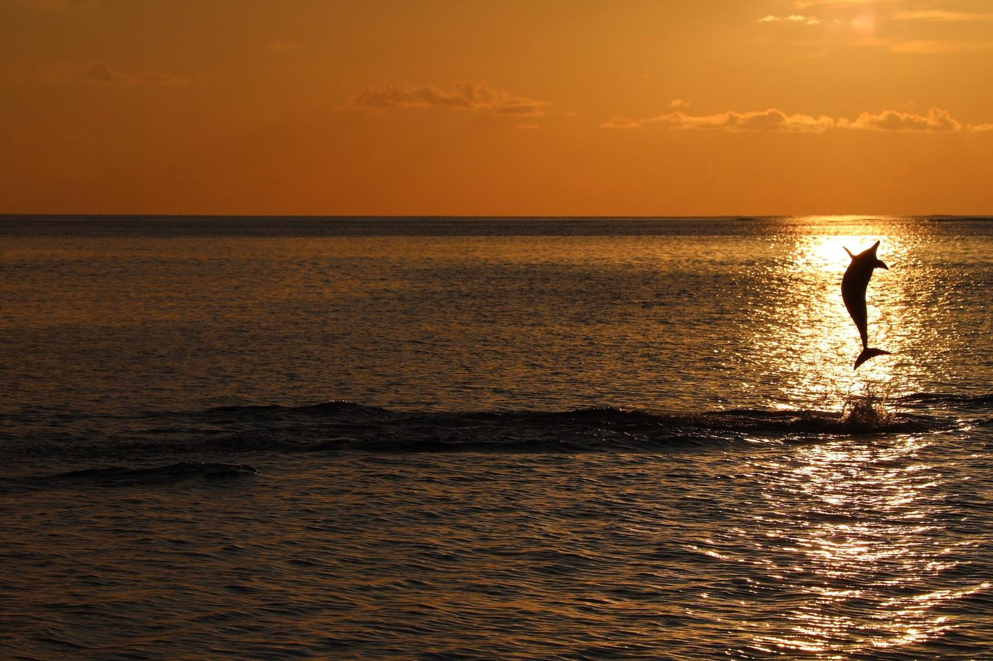 Special Mention - Young Photographer. Catch the Sun, Indian Ocean, Maldives.