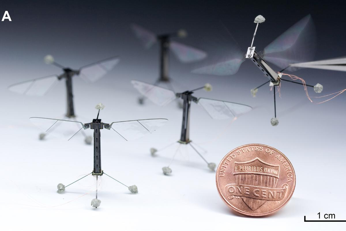 Harvard's RoboBees could one day work together in search and rescue operations (Photo: Kevin Ma and Pakpong Chirarattananon)