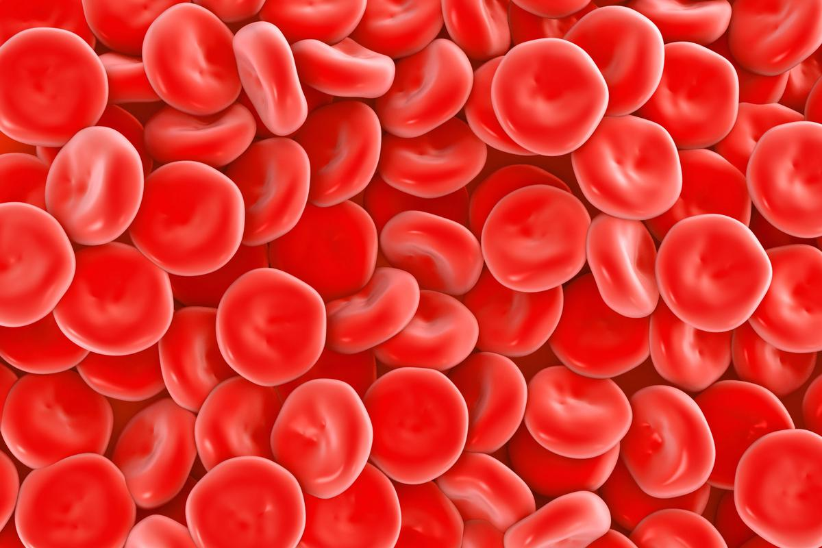 In the not-too-distant future, blood made with lab-grown red blood cells could be readily available for use in transfusions (Image: Shutterstock)