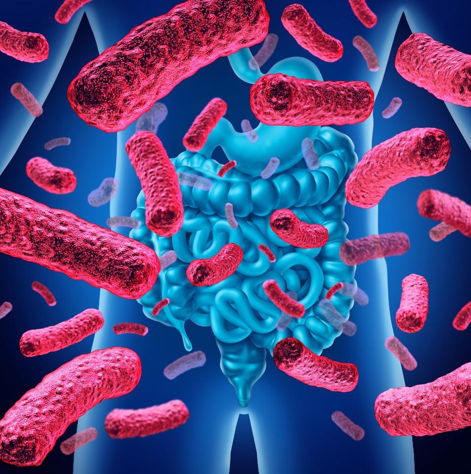 A new study has found gut bacteria may play a part in anxiety and depression seen to accompany conditions such as obesity and diabetes