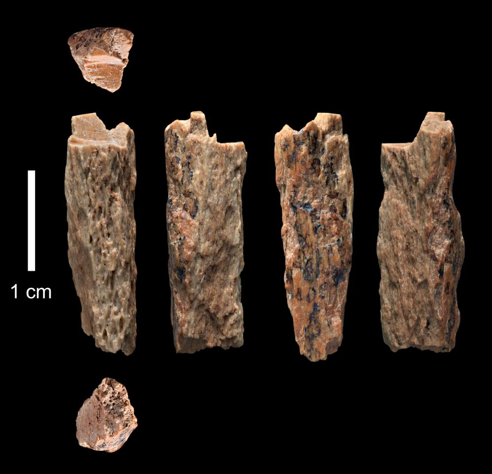The researchers studied the genome of this bone fragment, found in Denisova Cave, Russia