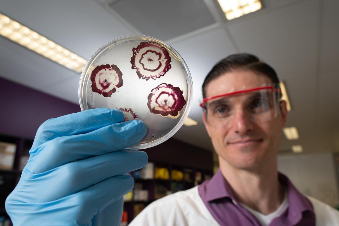 New hybrid antibiotics have been shown to blast through bacterial biofilms
