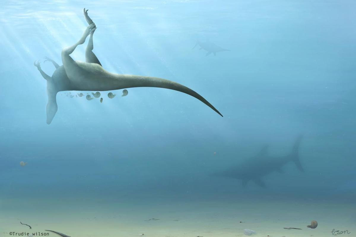 It is believed that after the animal died, its body was washed into a nearby shallow sea