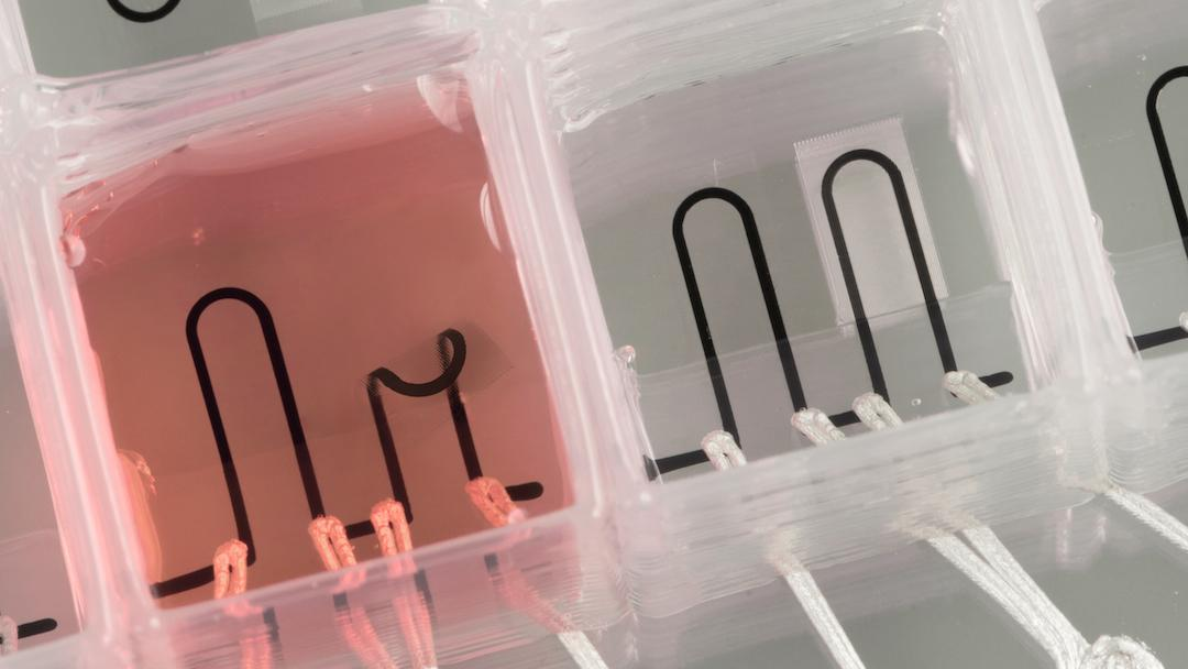 Researchers at Harvard have developed new materials that allow them to 3D print a heart-on-a-chip, with integrated sensors to simplify data collection
