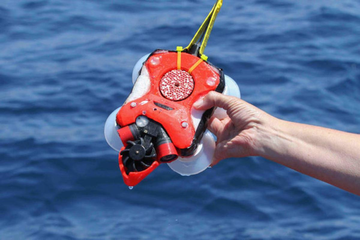 Attached to a whale with suction cups, this device tracks their movement in three dimensions, and records video both forwards and backwards simultaneously