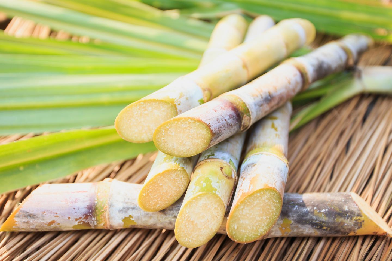 Researchers have created new sugarcane varieties using the CRISPR gene-editing tool