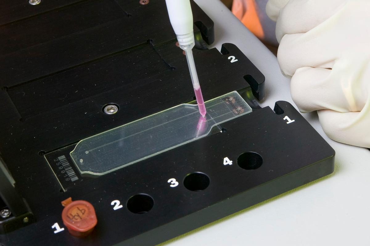 The one-inch wide by three-inch long Lawrence Livermore Microbial Detection Array that contains 388,000 probes that are used to detect viruses and bacteria
