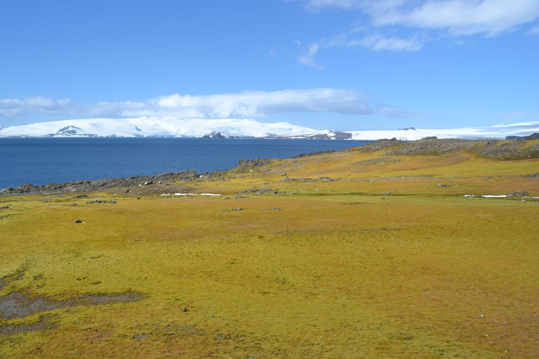 Антарктида стала зеленим континентом