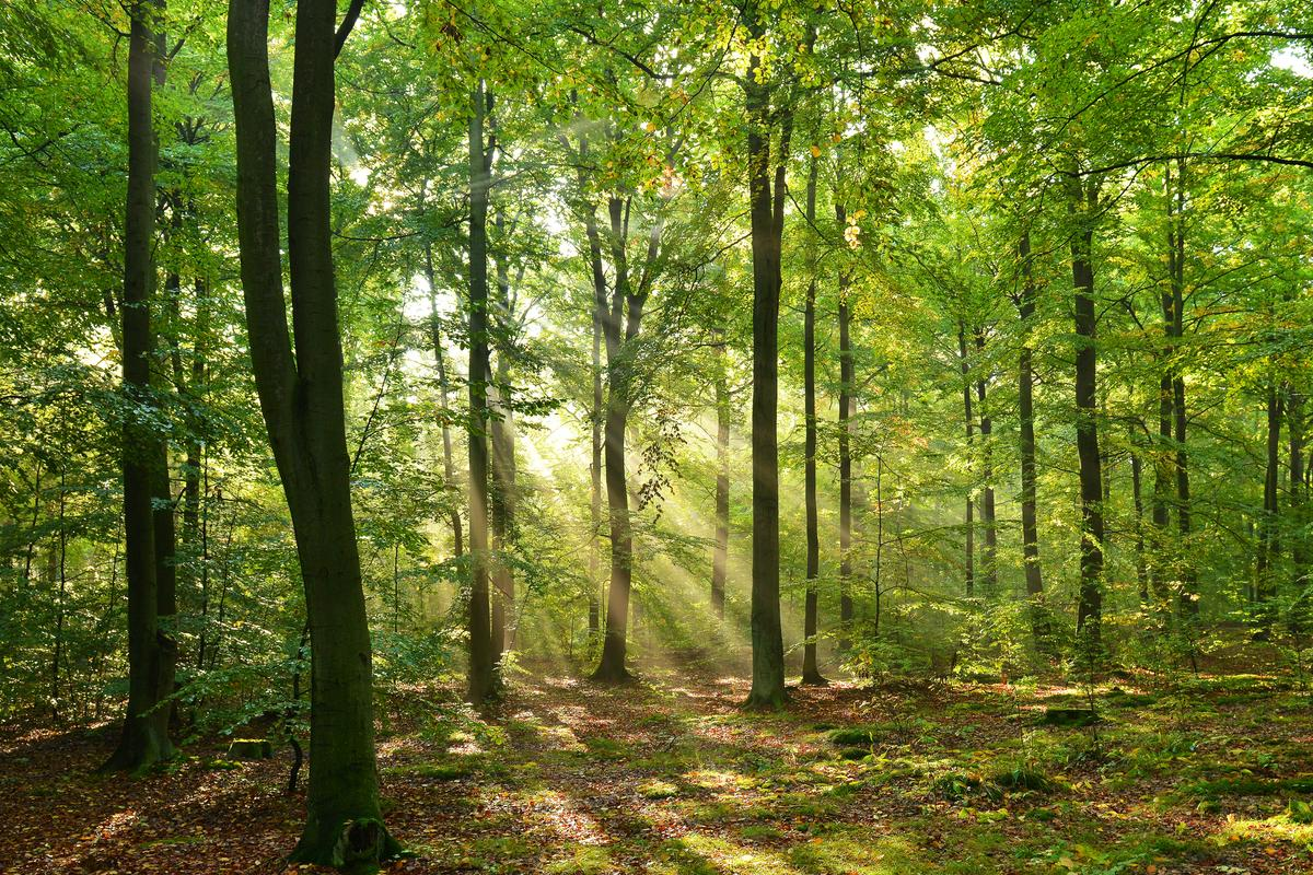 According to the study, our forests aren't what they once were
