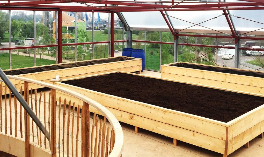 The generous rooftop vegetable garden, which the occupants use to grow most of their greens
