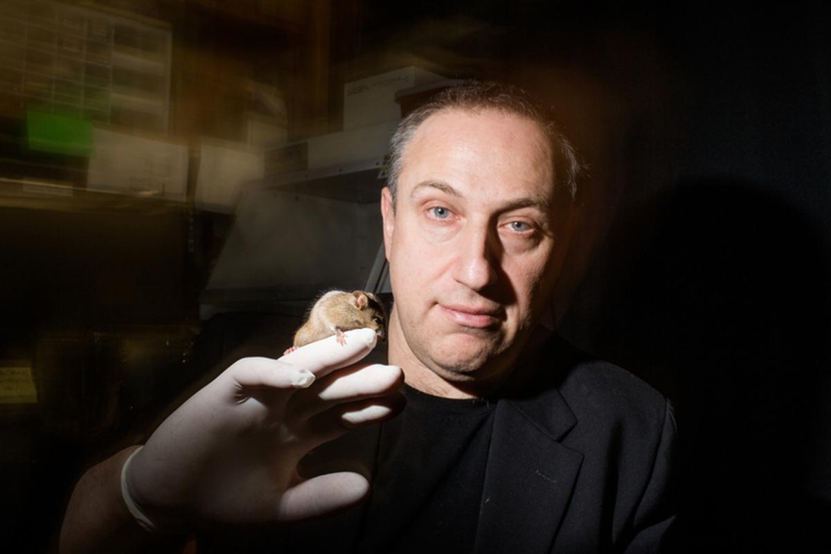 Transgenic mice developed by a team led by Hunter professor Paul Feinstein can be tuned to have different levels of sensitivity to any smell