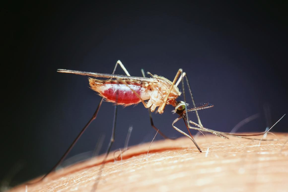 Mosquitos may be no match for graphene