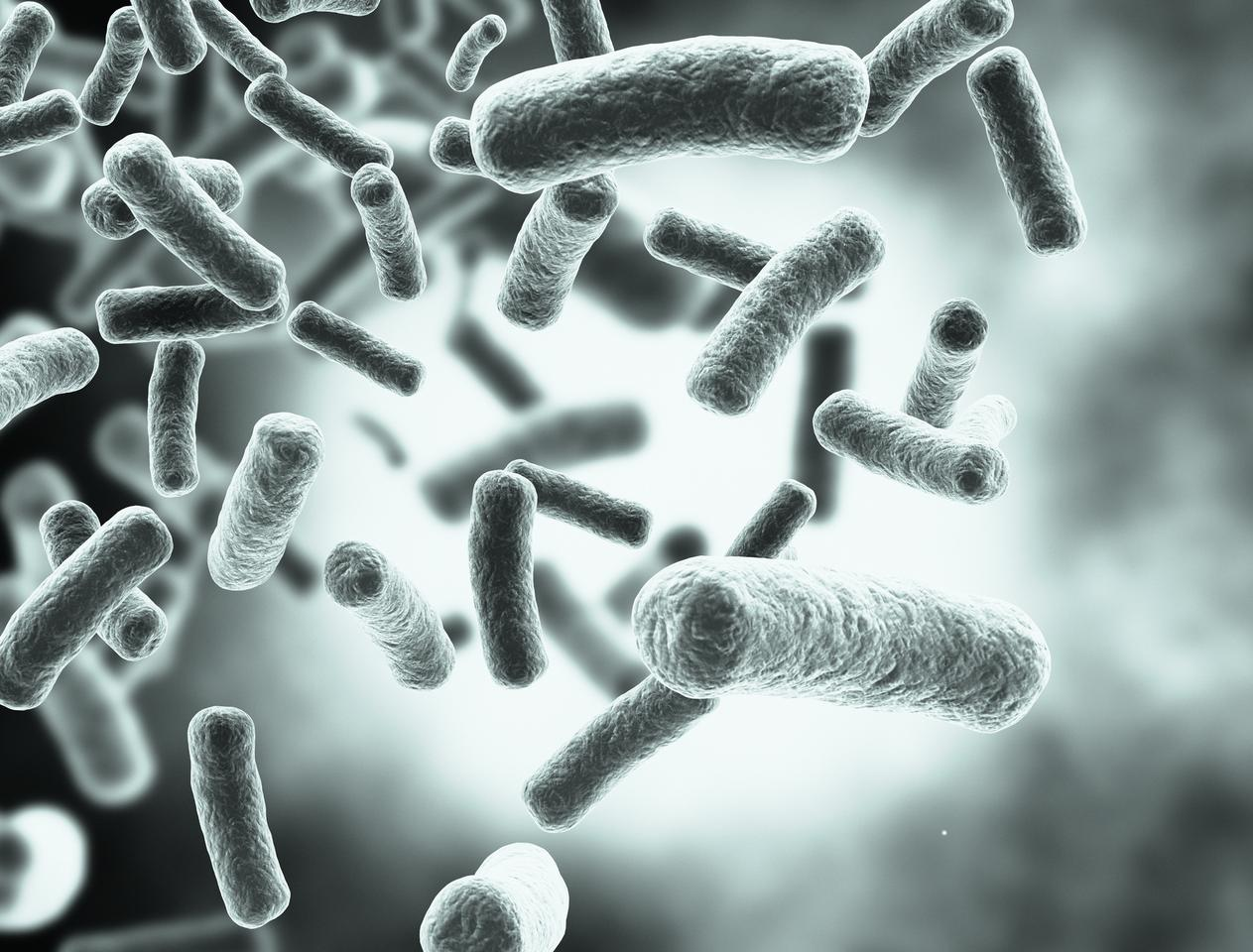 A new technique for fighting bacteria like Salmonella is to guide their evolution down dead-end paths where they can no longer harm the host
