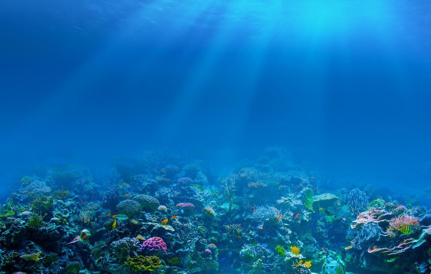 New research has shown how nutrient flows also pose a risk to vulnerable corals