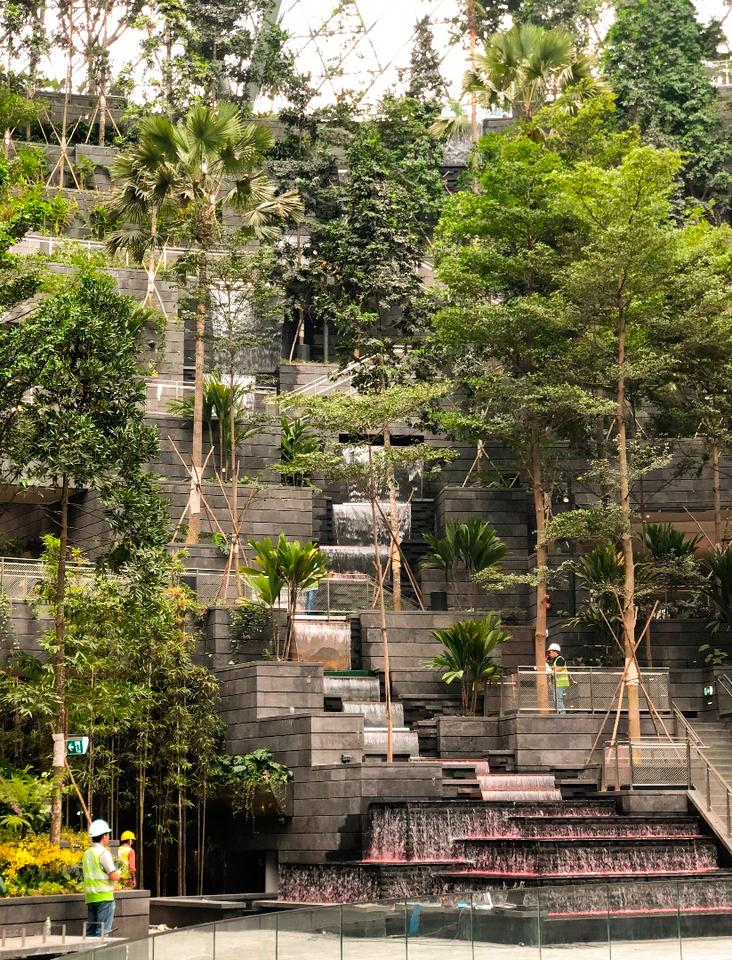 Jewel Changi Airport's Forest Valley is a terraced area featuring walking trails and seating, with over 200 species of plants