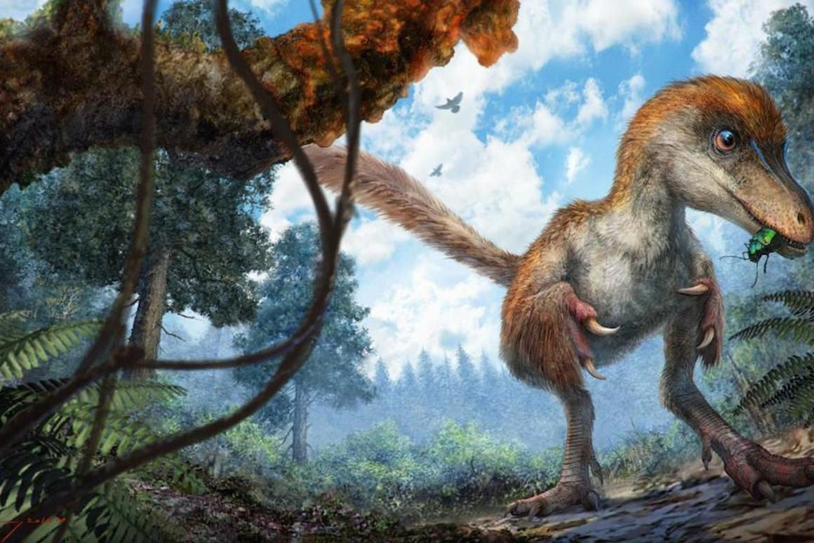 Researchers have found a section of a dinosaur tail with feathers, from a species of Coelurosaur, preserved in amber