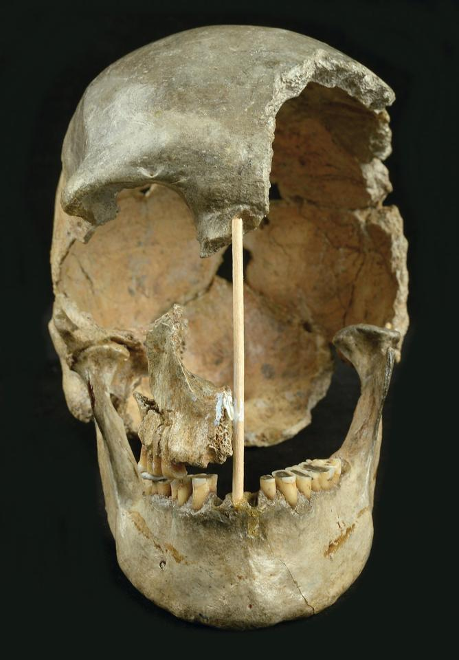 The skull of Zlatý kůň, which the researchers suggest represents the oldest known modern human genome