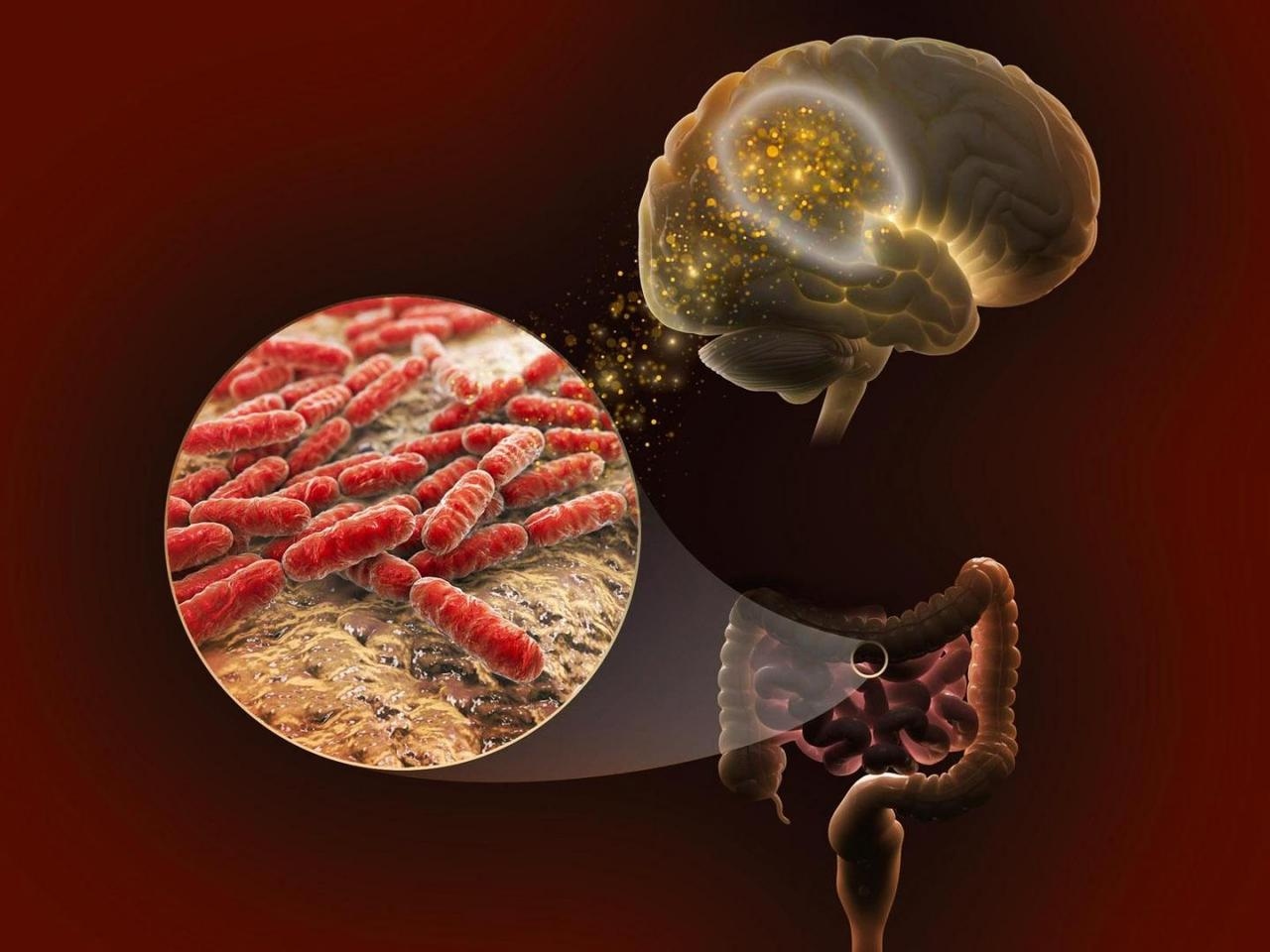 Lactate, produced by certain species of gut bacteria, may influence our memory