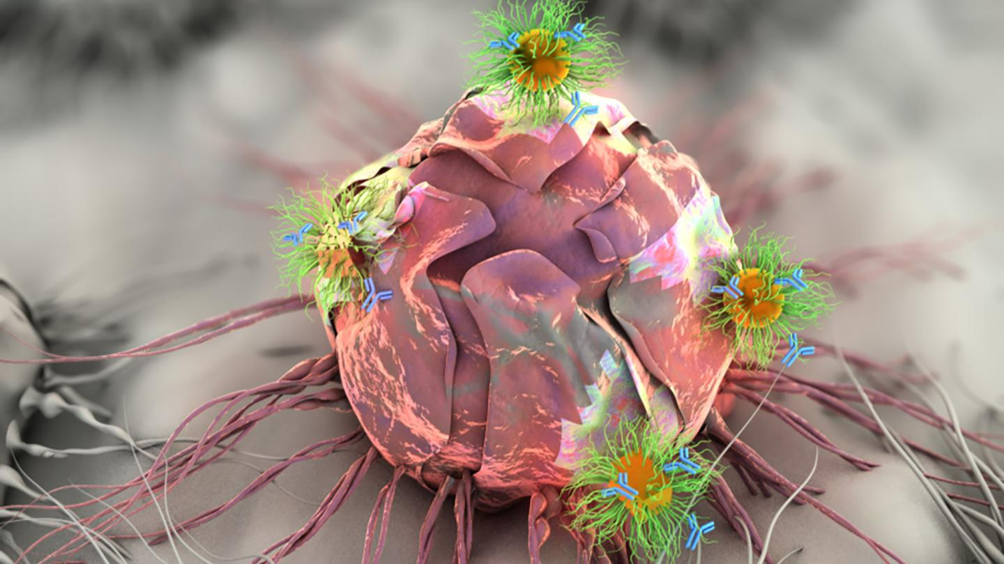 The patch contains specially-designed nanorods and nanospheres, seen here attacking the tumor cells