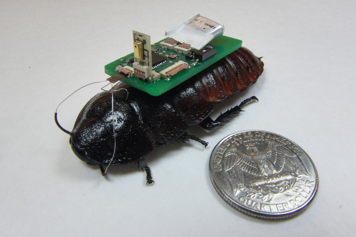 Researchers at NCSU have developed a way to use remote-controlled cockroaches workingin conjunction with dronesto help map environments like collapsed buildings