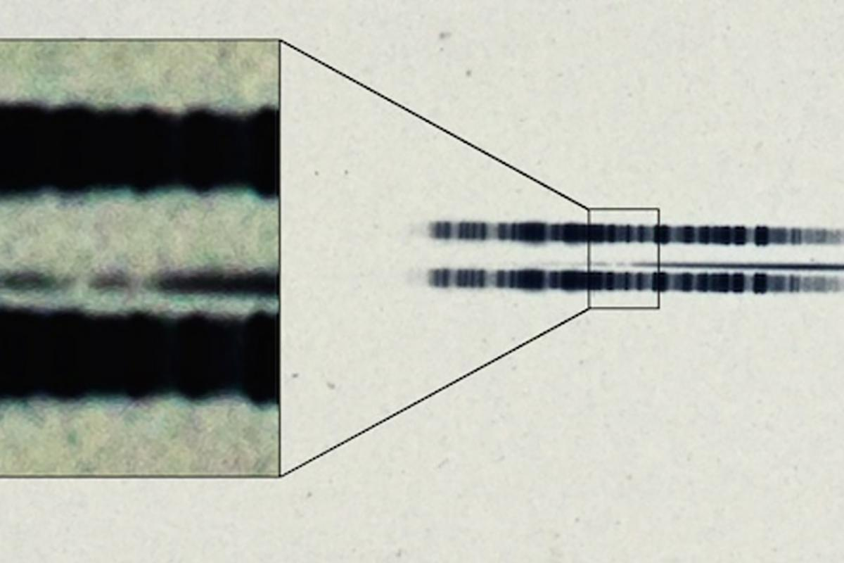 Researchers were able to spot heavy elements such as calcium in the spectrum, which can be seen as a dark line in between two broader lines, themselves from lamps used to calibrate wavelength