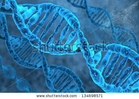 The new DNA uses bases not found in nature (Image: Shutterstock)