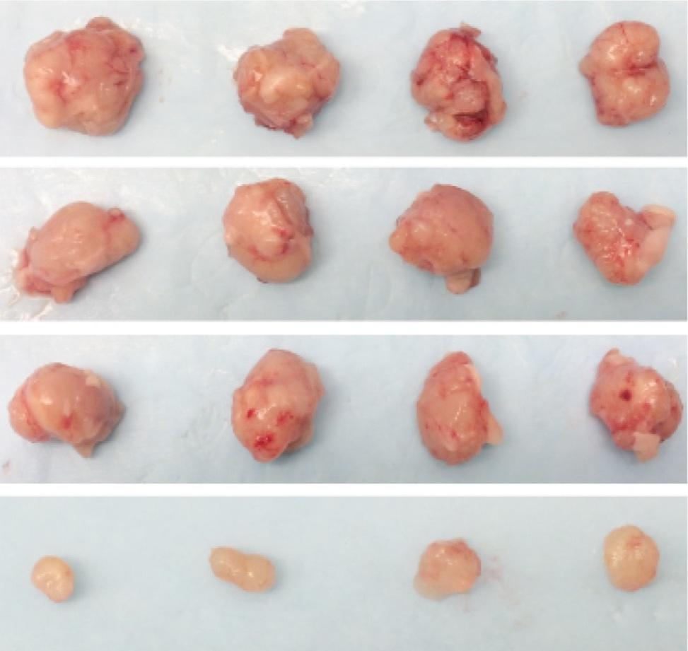 The bottom row shows tumors treated with the drug combo, compared with tumors without treatment or with single treatments in the rows above
