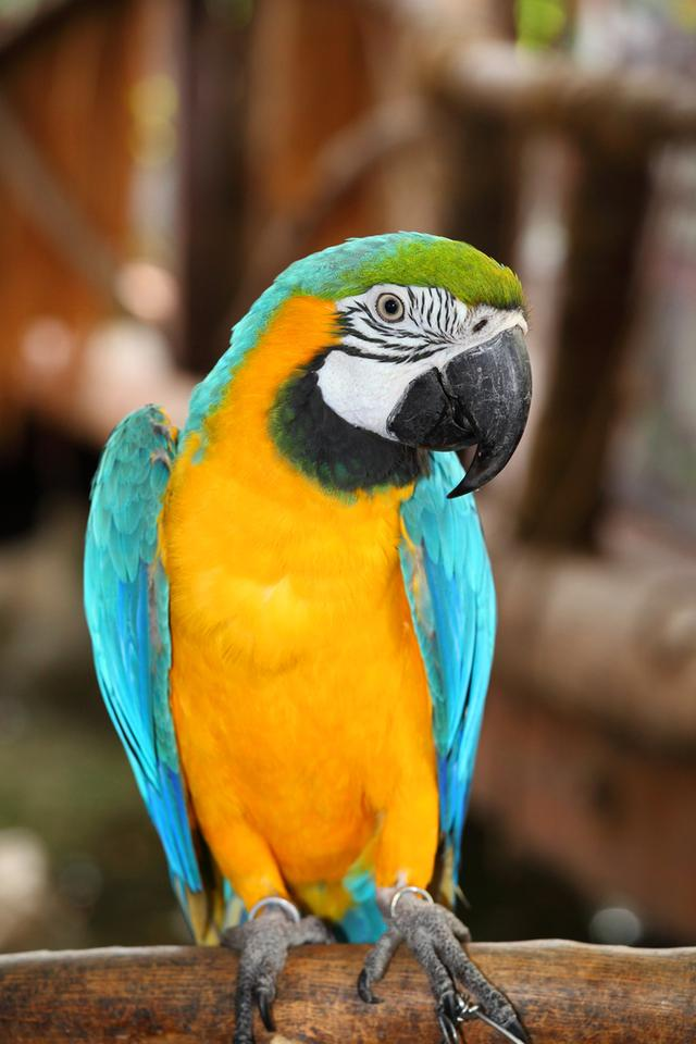 The parrot-inspired Polly voice game is designed to teach poor and illiterate Pakistanis how to use telephone services (Photo: Shutterstock)