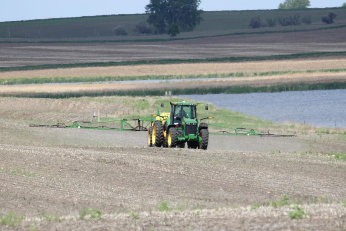 It's possible that herbicides might be more effective if applied at dawn