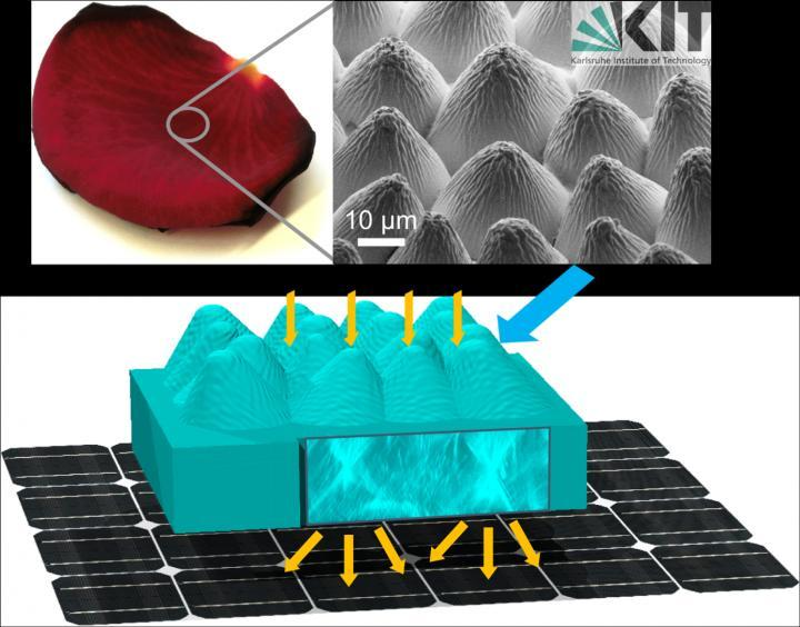 The image at the upper right shows the magnified surface of the rose petal, which was duplicated and applied to a solar cell to boost its effeciency