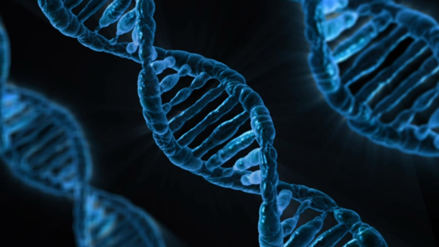 Made from DNA (pictured), the tiny thermometer could have a big impact on our understanding of molecular biology