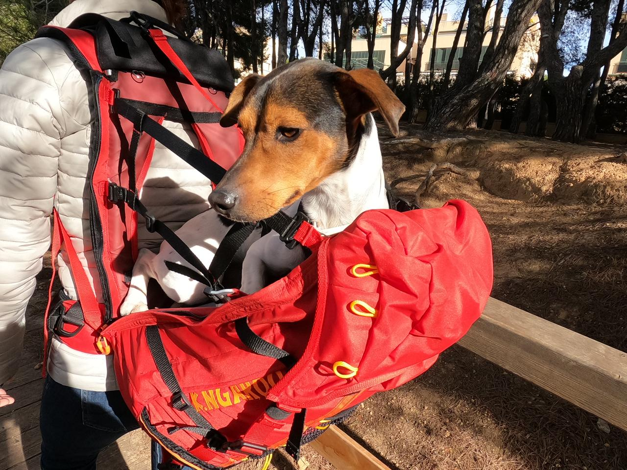 The Roo backpack, totin' a dog