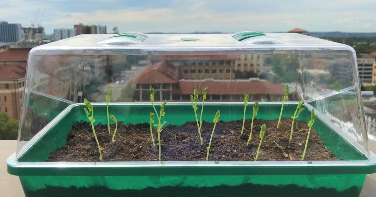 Self-watering SMAG-soil pulls moisture from the air