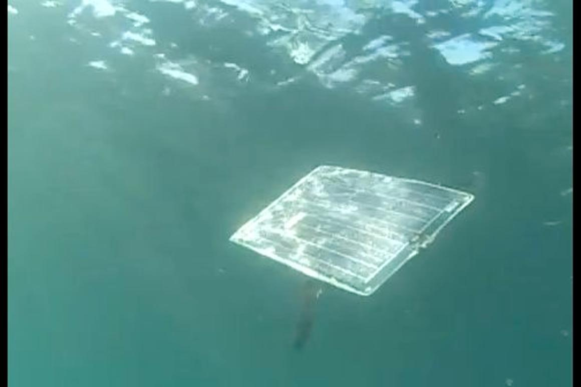 Scientists have created a solar-powered swimming underwater robot, inspired by the ocean sunfish