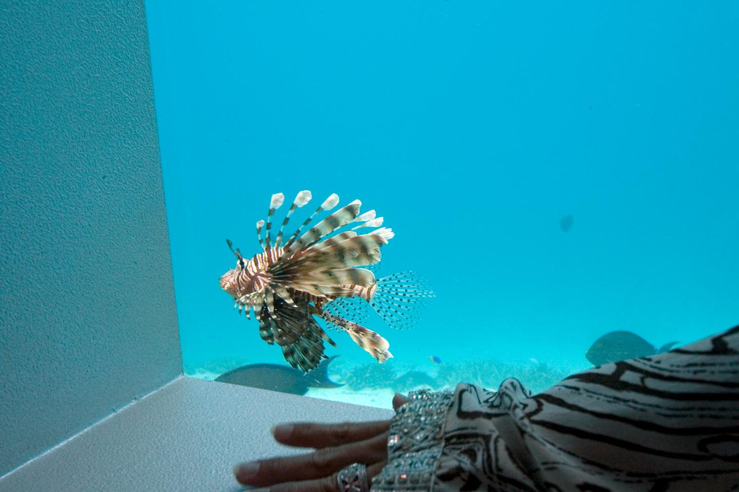 Local fish and underwater life can be observed while taking a massage