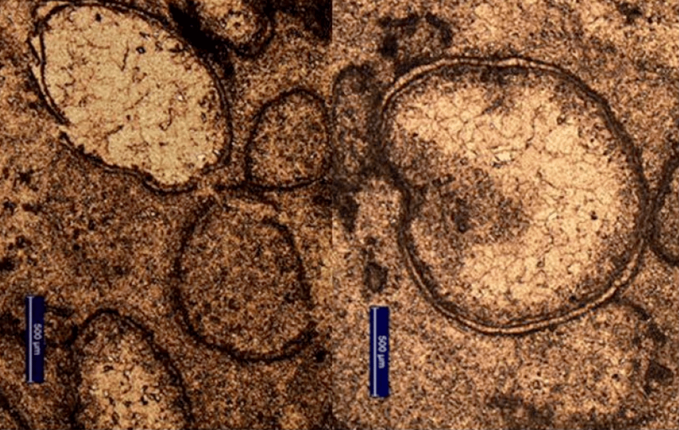 A close-up of the spherules that led the researchers to suspect an asteroid impact on Earth about 3.5 billion years ago