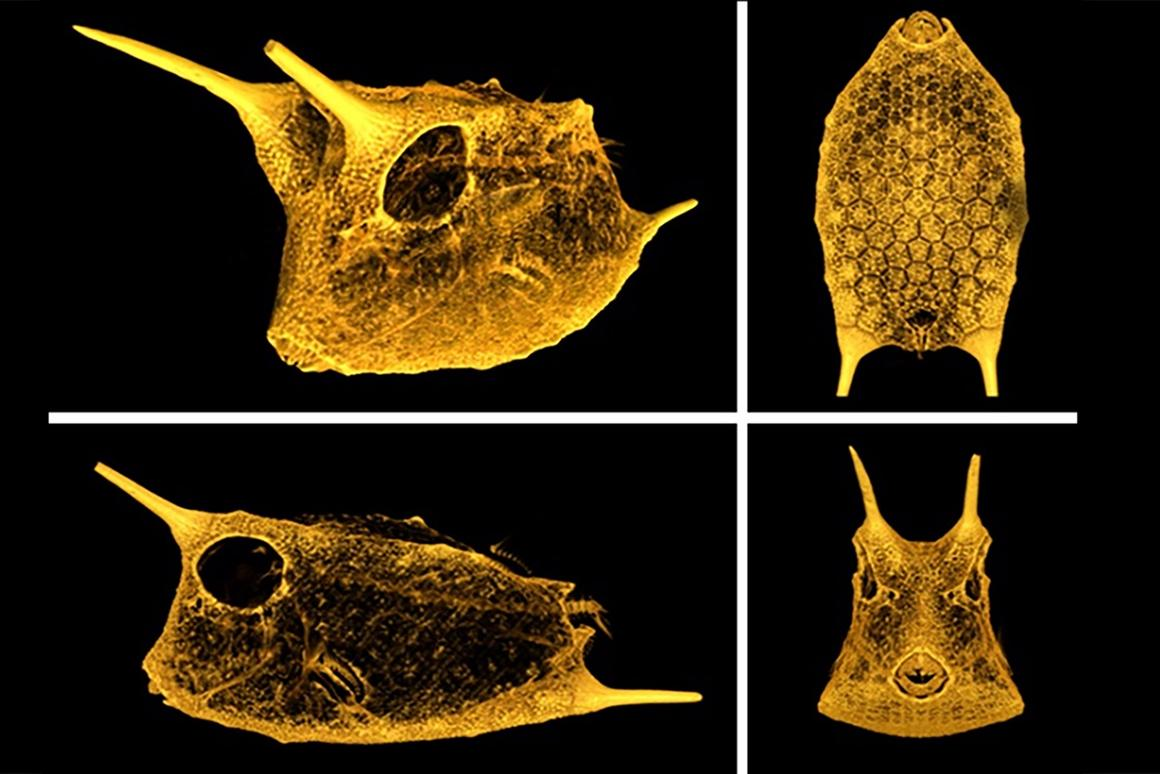 The carapace of a boxfish features a unique hexagonal scale structure