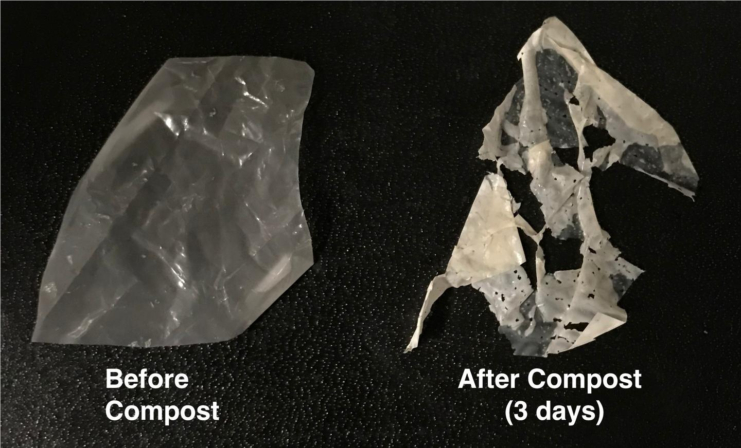A sample of the new enzyme-embedded degradable plastic, before and during composting