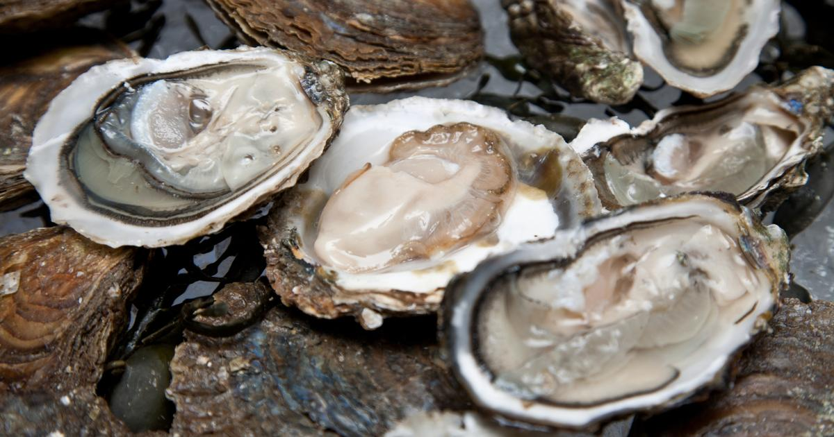 Super-supplemented shellfish found to be rich in vitamins