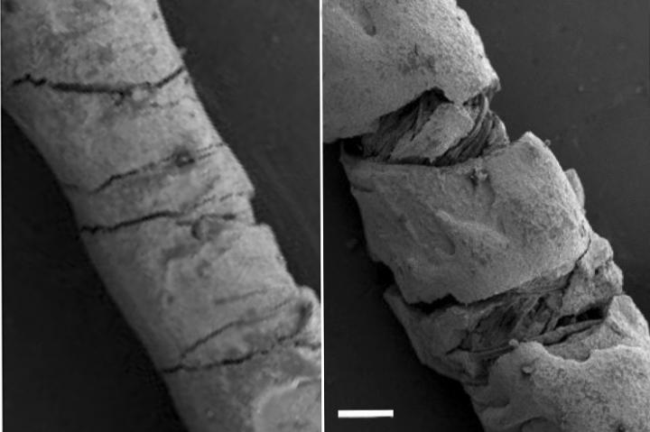 Scanning electron microscope photos of a straight thread (left) and one that's bending under strain (right)