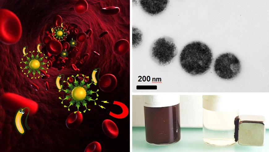 """Bacteria can be removed by magnetic blood purification (left) – asuspension with magnetic iron particles (top right) can be """"cleaned"""" using a magnet (bottom right)"""