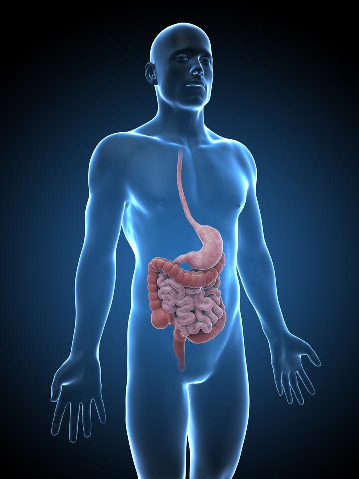 A new device simulates the way in which the gastrointestinal tract absorbs orally-administered drugs (Image: Shutterstock)