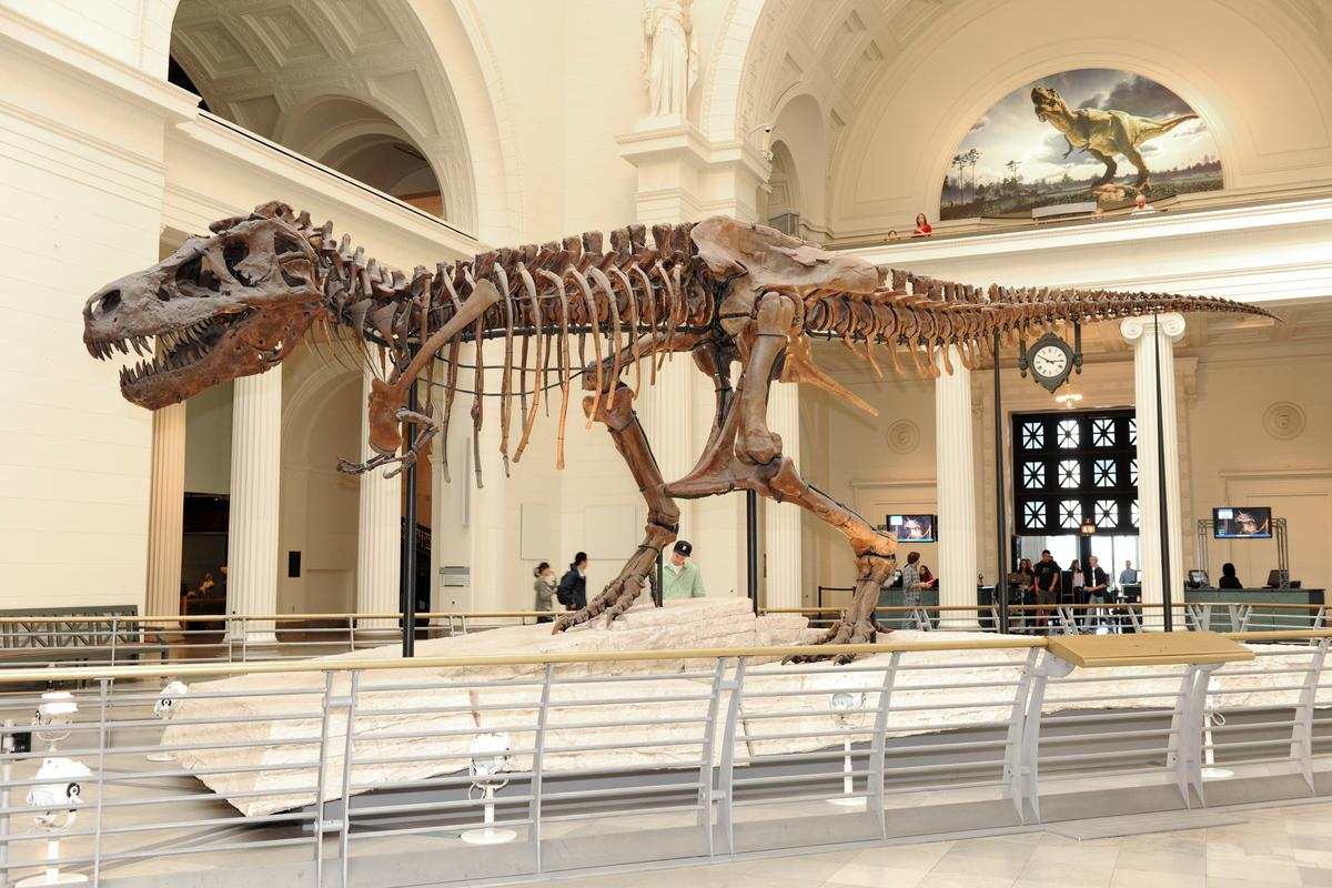 The SUE Tyrannosaurus rex skeleton at Chicago's Field Museum