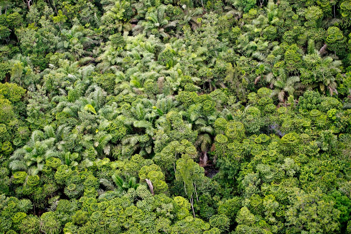 Forest canopy in Gabon