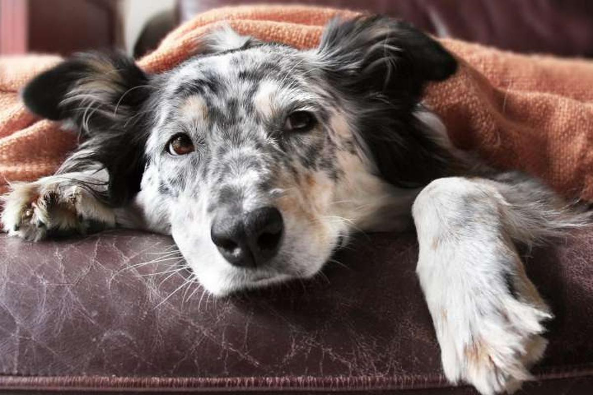 Scientists at the University of Rochester School of Medicine and Dentistry have developed, for the first time, two new vaccines for canine influenza