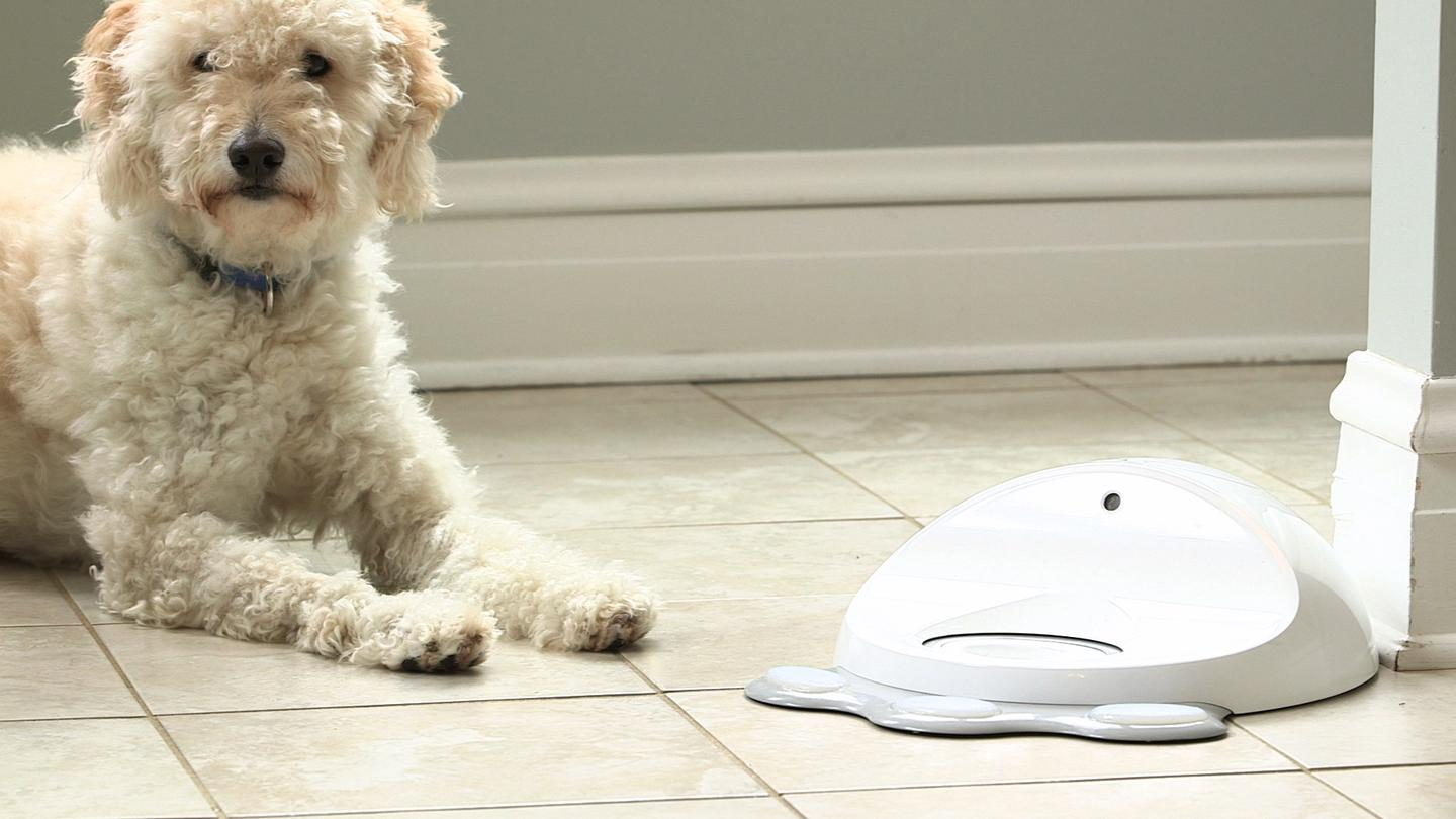 CleverPet adjusts iteself to match your dog's performance