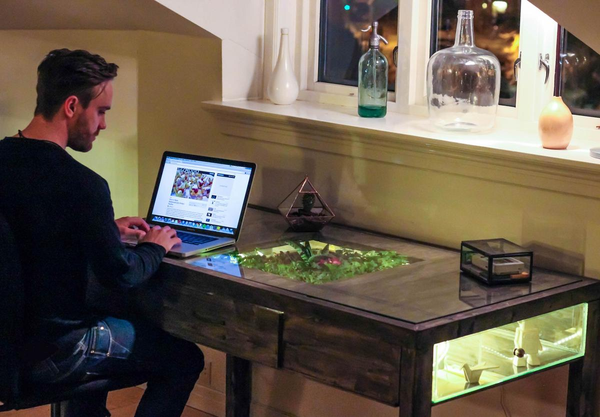 Daniel Zellor using his laptop on Terrarium Desk (Photo: Daniel Zeller)