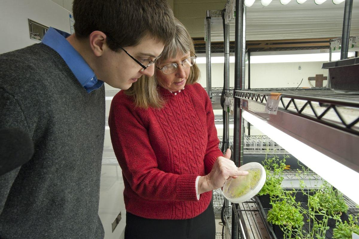 Dr. June Medford, with some of her pollutant- and explosive-sniffing plants