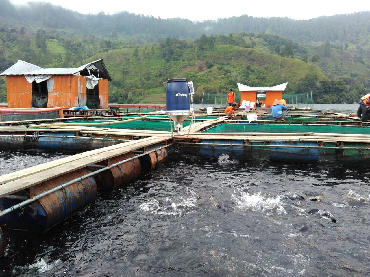 eFishery currently works with carp, catfish, tilapia, snapper, and vannamei shrimp