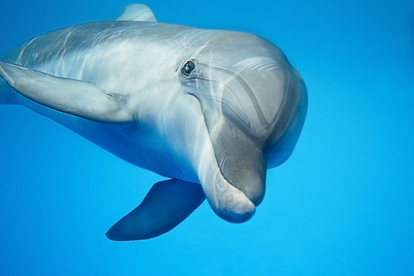 The telltale signs of Alzheimer's have been detected in the brains of wild dolphins for the first time